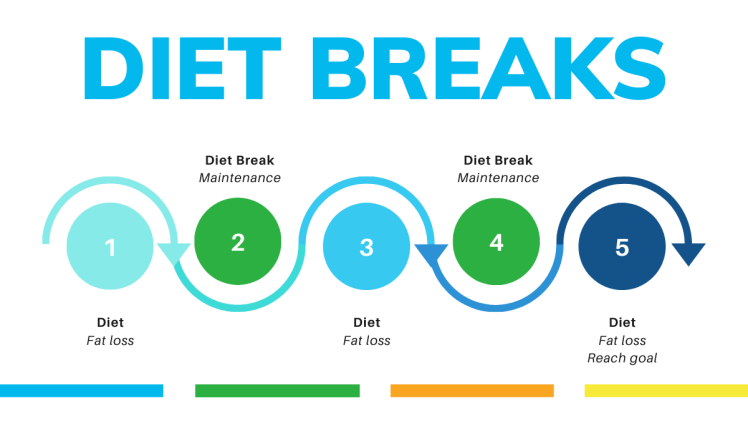 Diet Break Cycle